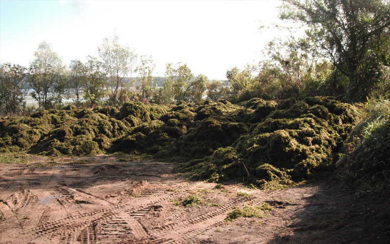 The weed dump site.